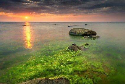 Spirulina kaufen - Die Algen im Wachstum unter natürlichen Bedingungen